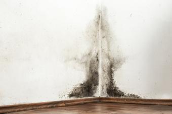 Pojava plijesni na zidu