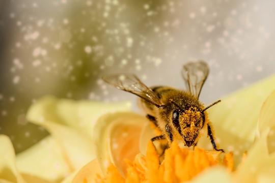 pollen_bee_comfortventilation.jpg